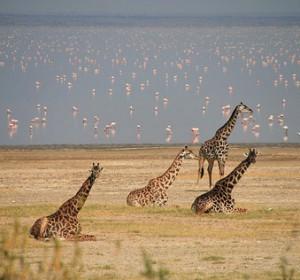 book trip in Tanzania