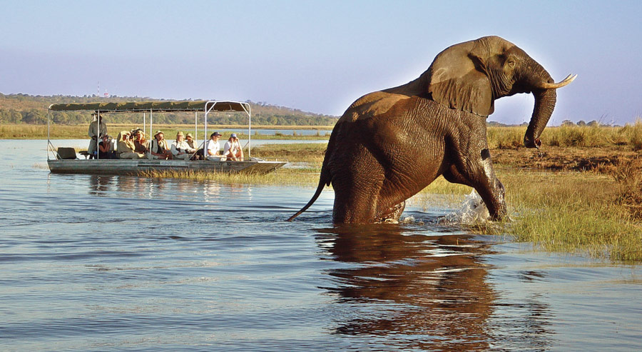Chobe-National-Park-Botswana
