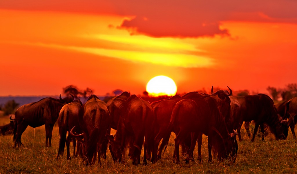 ann_bottom_Maasai Mara National Reserve