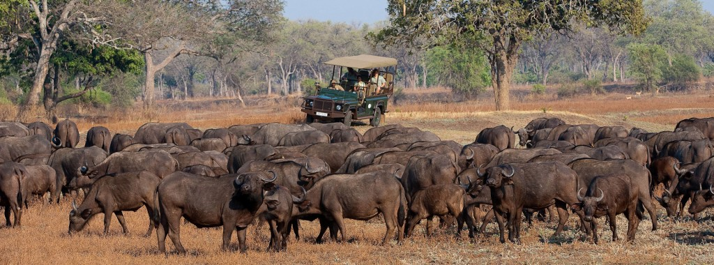 game-drive-the-bushcamp-company-south-luangwa-national-park-zambia-21-safari