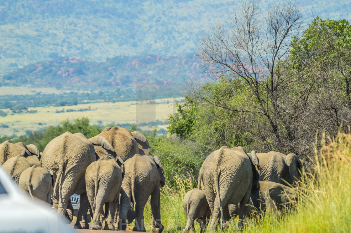 safari travel in botswana