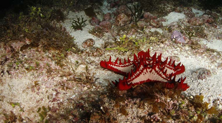 Reefs of Andaman