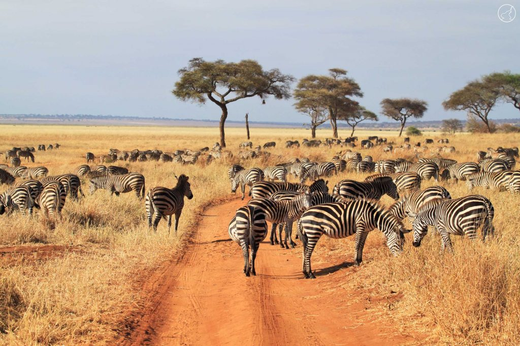 luxury tour in Tanzania