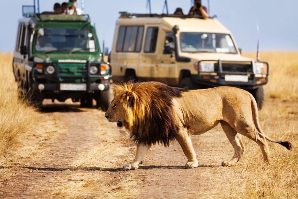 Luxury Travel Safari
