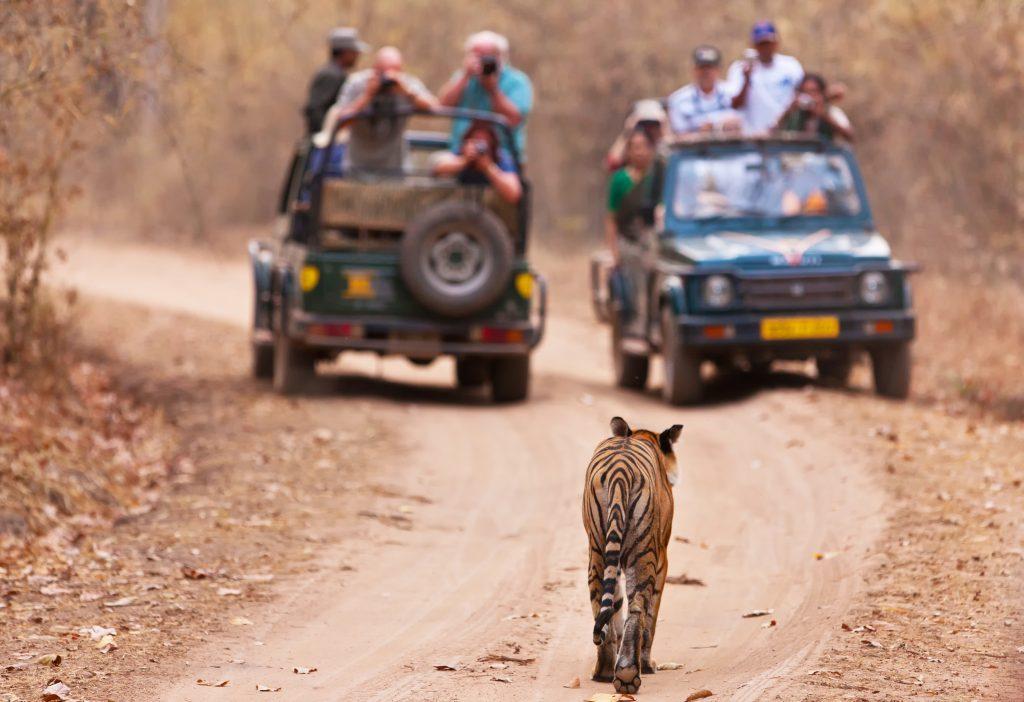 safari destinations in kenya